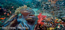 Call for entries: Raja Ampat Underwater Photo Contest Photo
