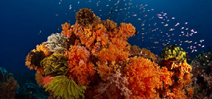 Where to Scuba Dive in Papua New Guinea by Don Silcock Photo