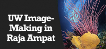 Wetpixel Live: UW Image-Making in Raja Ampat Photo