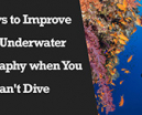 Wetpixel Live: 5 Ways to Improve your Underwater Photography when you Can't Dive. Photo