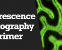 Wetpixel Live: Fluorescence Photography Primer Photo