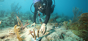 Canon USA supports Coral Restoration Project Photo