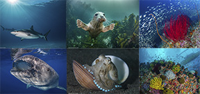Calling all Underwater Image Makers Photo