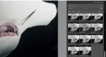 Adobe explains how to use and create Profiles in Lightroom Photo
