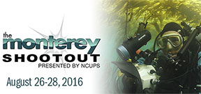 Call for entrants: 2016 Monterey Shootout Photo