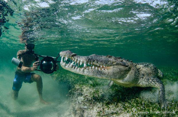 Cotton crocs03