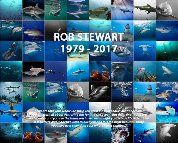 Shark wall rob stewart text