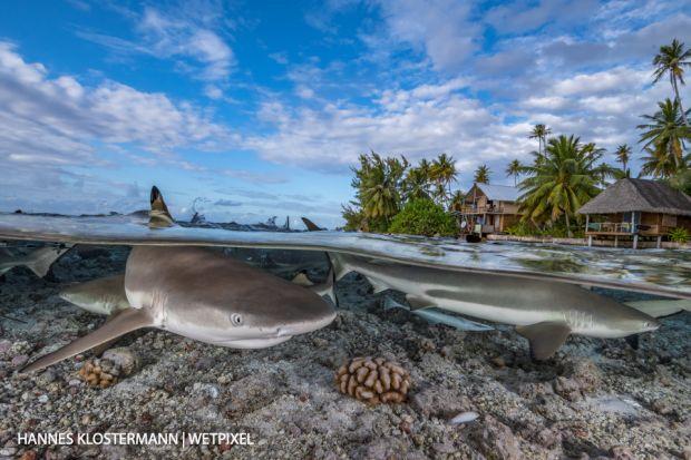 Hk french polynesia 2018 095